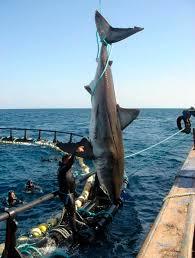 Какую рыбу можно поймать в Средиземном море
