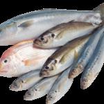 Женская рыбалка во Франции